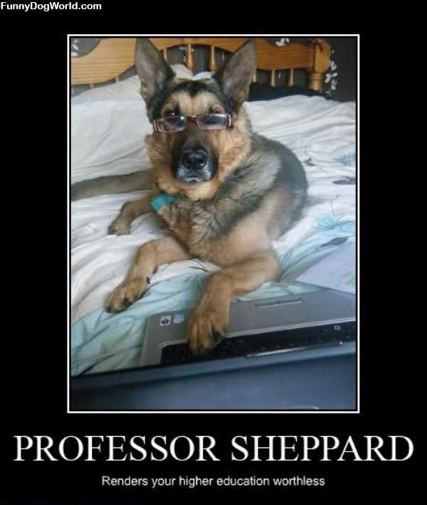 Professor Sheppard