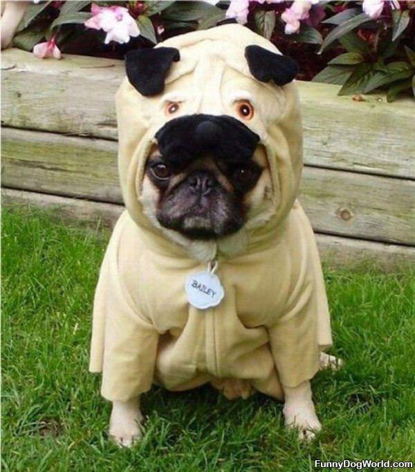 Pug Pug Costume
