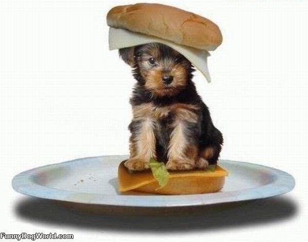Puppy Sandwich