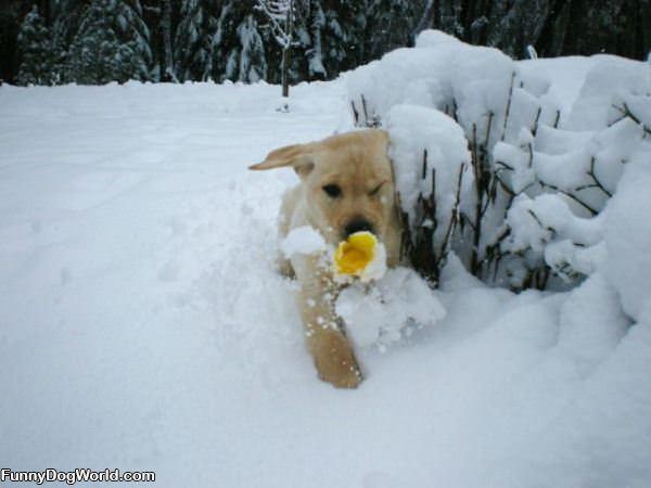 Puppy Through The Snow