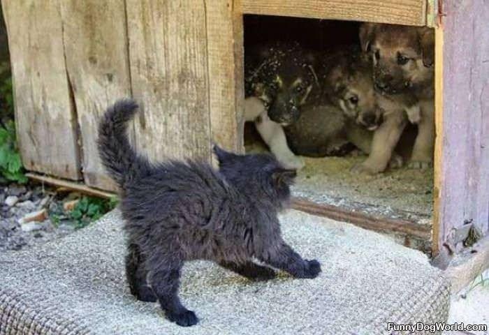 Puppy Vs Kitten