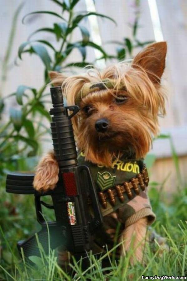 Rambo Dog