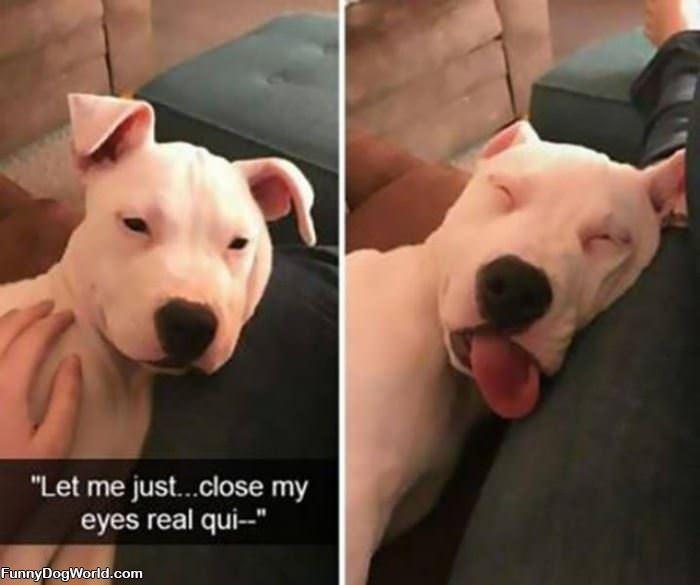 Real Quick Nap