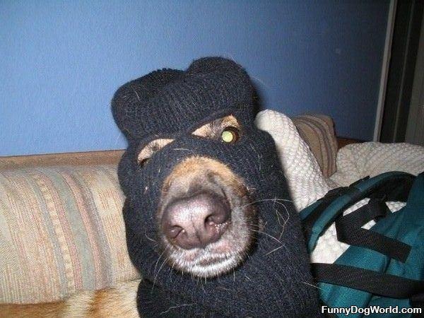 Robbery Dog