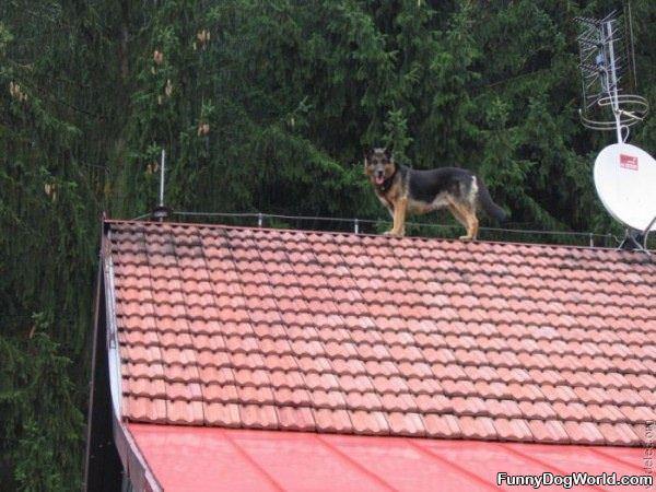 Roof Dog