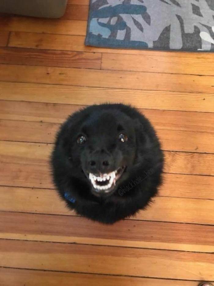 Round Fun Dog