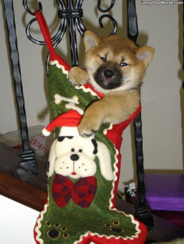 Santa Brought Me