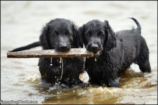 Sharing A Fetch