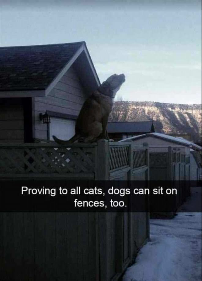 Sitting On Fences Too
