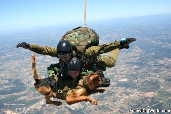 Sky Dive Dog