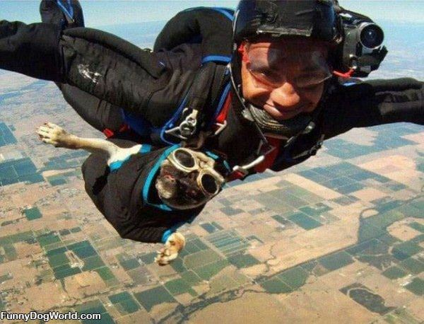 Sky Diving Dog