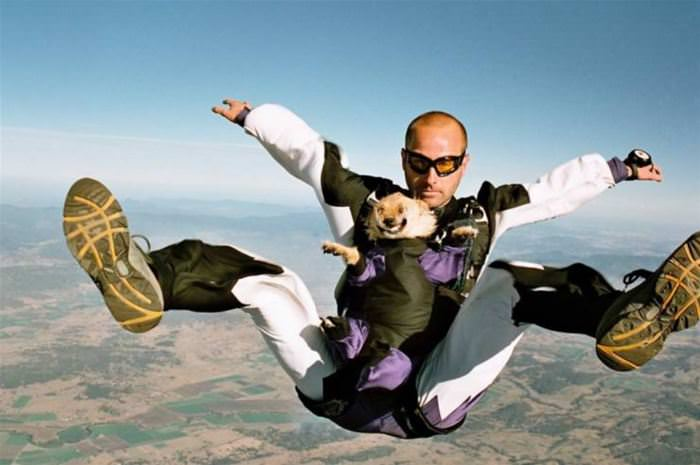 Sky Diving Doggo