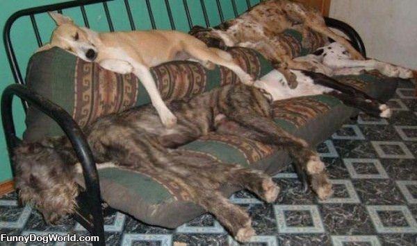 Sleeping Spot