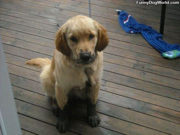 Slightly Muddy Puppy