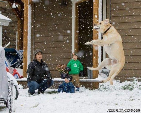 Snow Biter