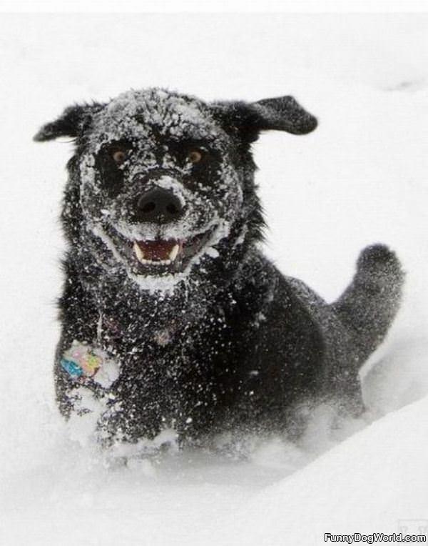 Snow Dog Is Happy