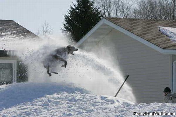 Snowblower Dog