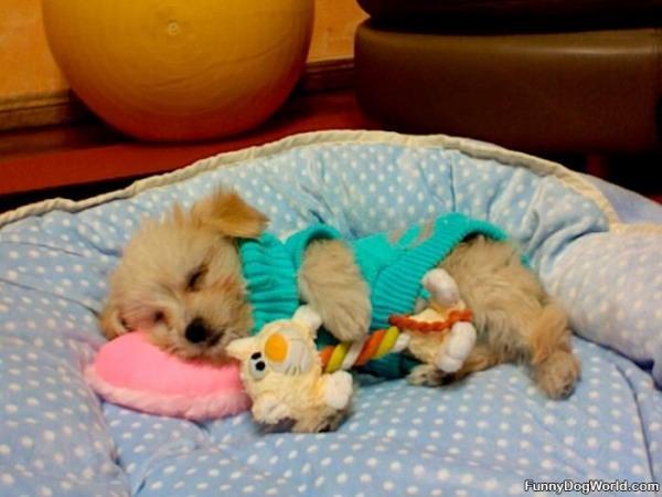 So So Sleepy