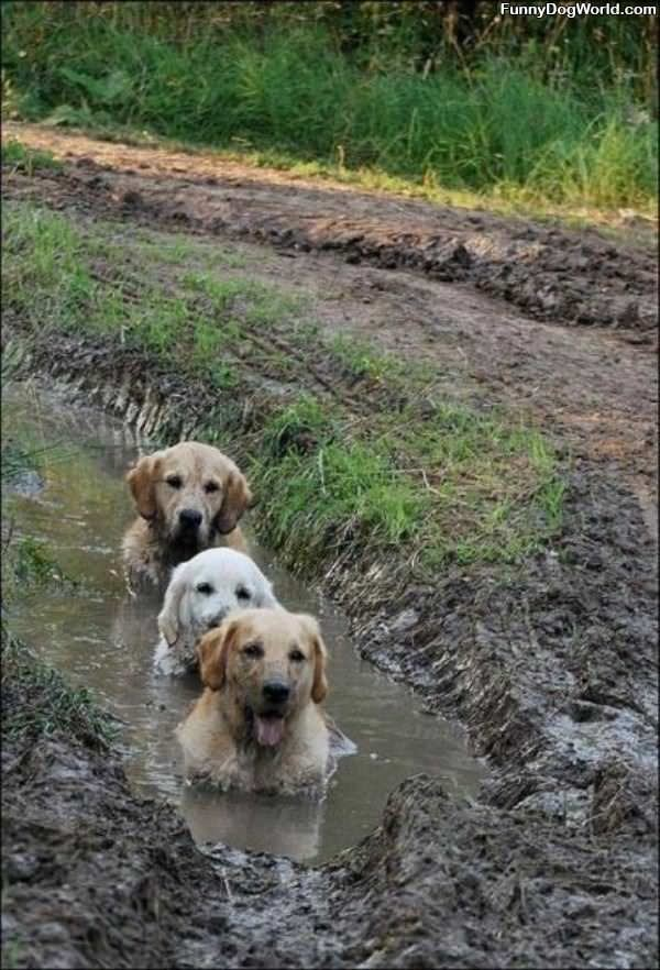 Some Mud Dogs