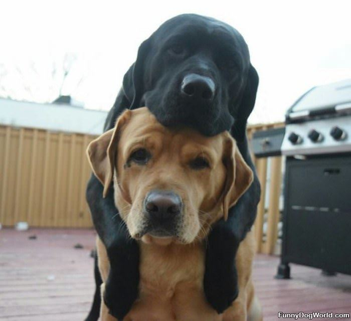 Stacking Dogs