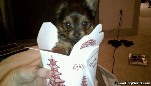 Super Tiny Puppy