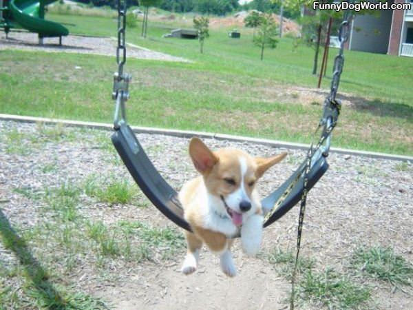 Swinging Dog