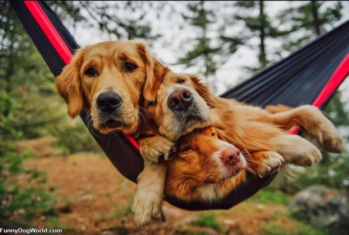 Swinging Together