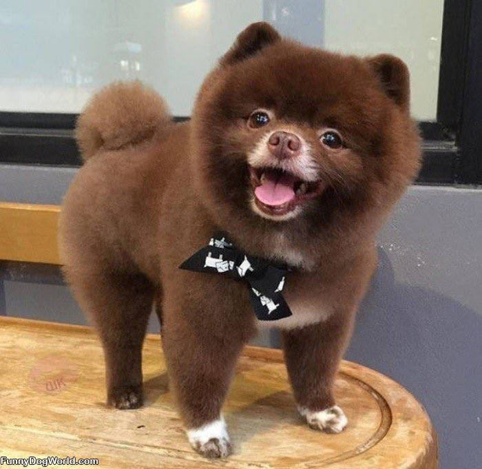 That Is A Fluffy Pup
