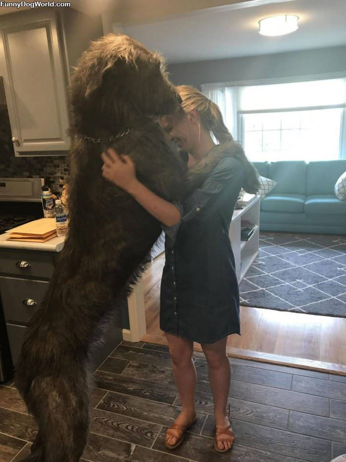 That Is A Tall Dog