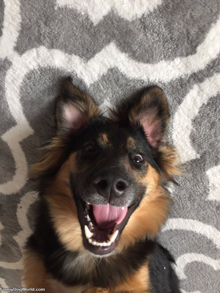 That Is One Happy Dog