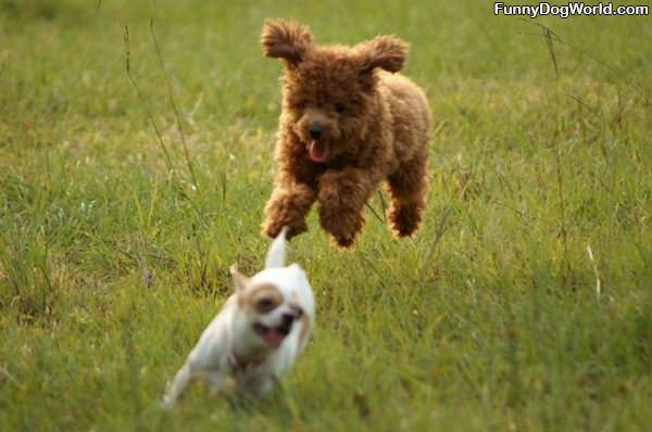 The Amazing Flying Dog