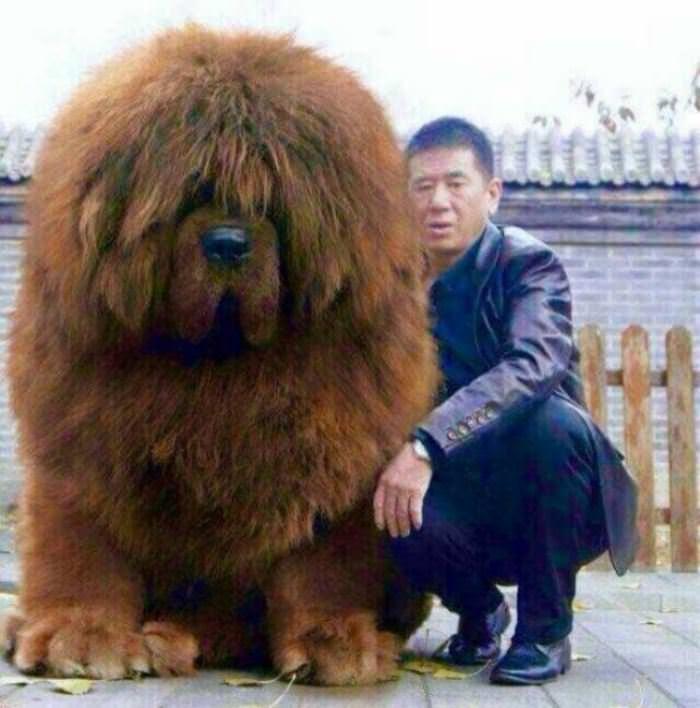 The Bear Dog