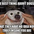 The Best Thing About Dogs