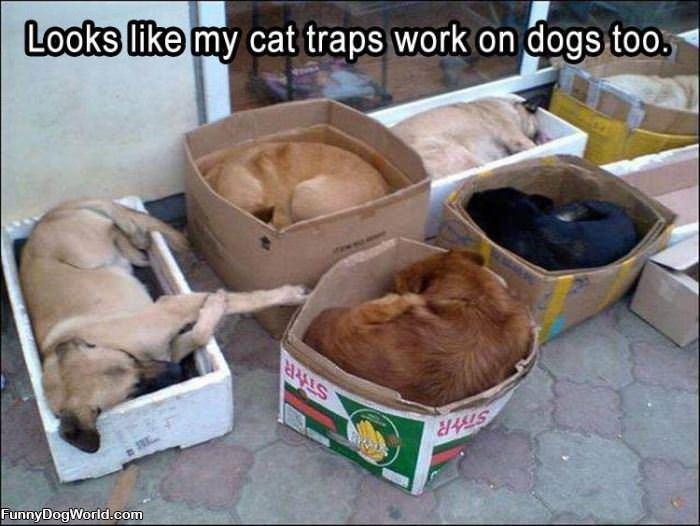The Cat Trap Also Works On Dogs