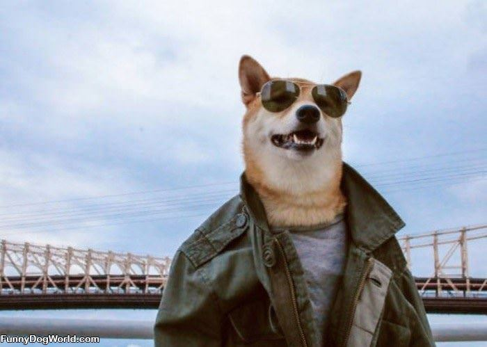 The Coolest Dog Ever