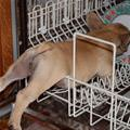 The Dish Washer