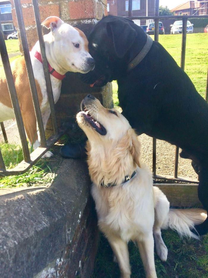 The Dog Meetup