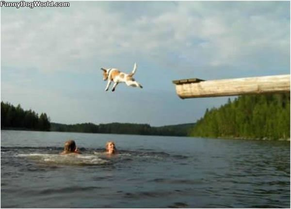 The Doggie Dive