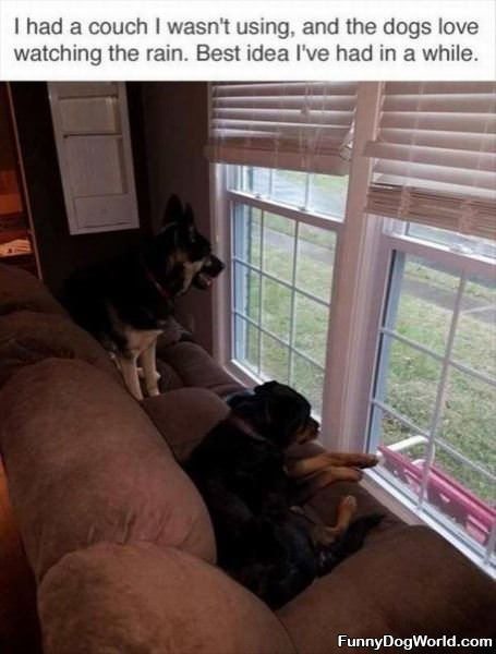 The Dogs Love Watching The Rain