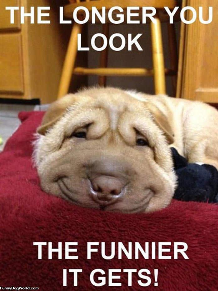 The Funnier