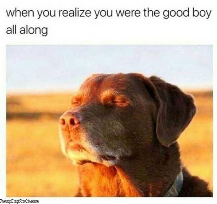 The Good Boy All Along
