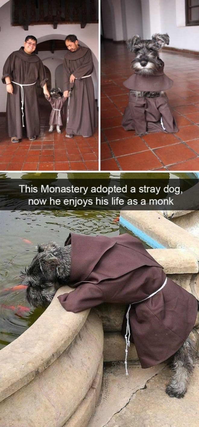 The Monk Dog
