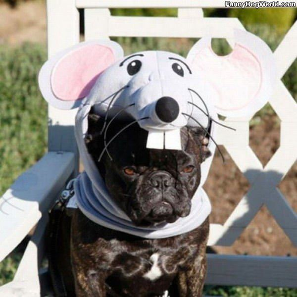The Mouse Dog