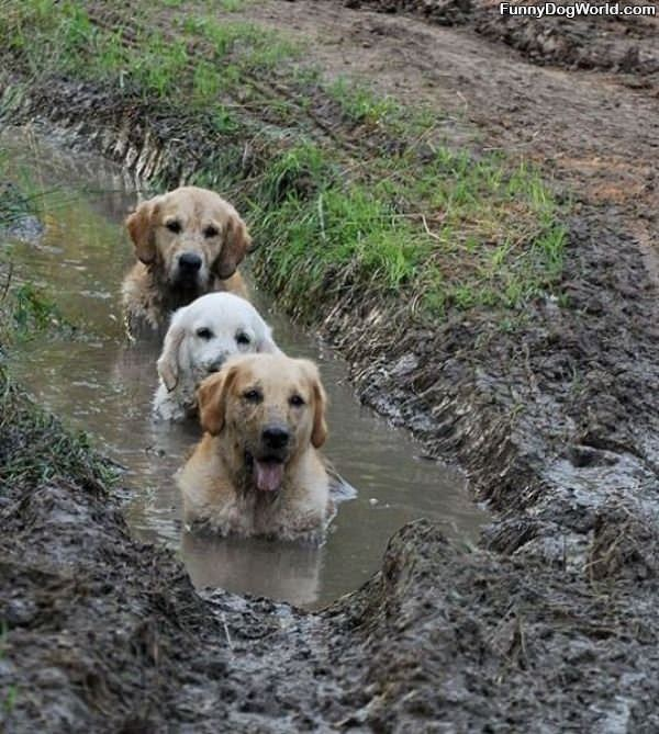 The Mud Dogs