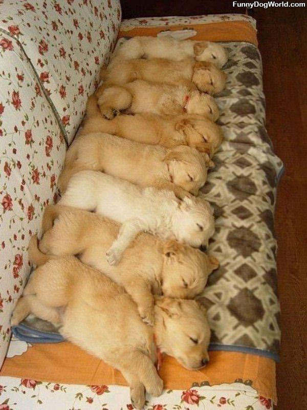 The Puppy Couch