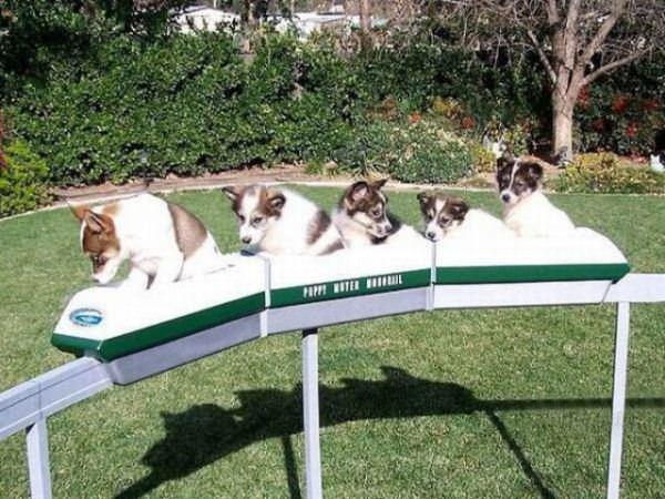 The Puppy Train