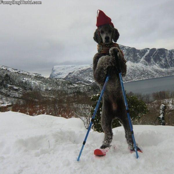 The Ski Dog