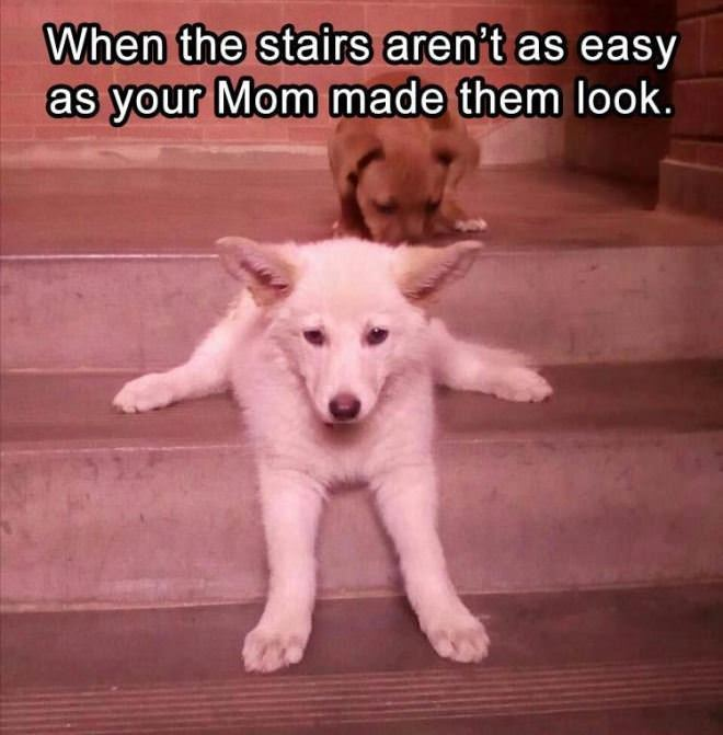 The Stairs Are Not That Easy