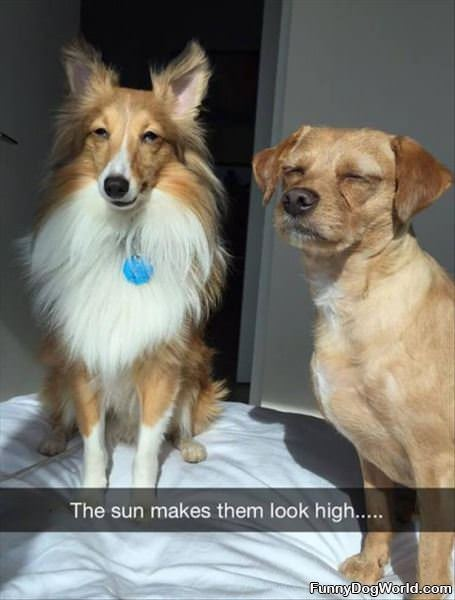 The Sun Makes Them Look High
