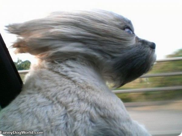 The Windy Ride